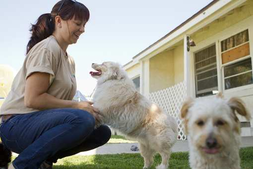 The 10 Best Dog Kennels in Wisconsin!